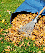 leaf-removal.png